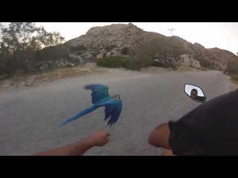 A guy racing his Macaw Parrot at Kolimbithres-Paros