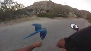 Racing my Macaw Parrot at Kolimbithres-Paros - YouTube