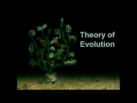 Fossils and Evolution – What is the Biblical View? – Chris Ashcraft