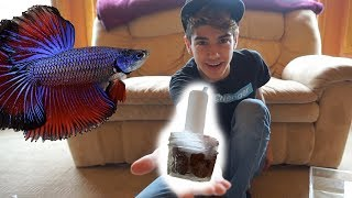 HOW TO: DIY Betta Filter  - SPONGE FILTER by  Challenge the Wild