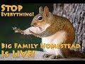 Winter Homesteading | A Big Family Homestead Live Stream
