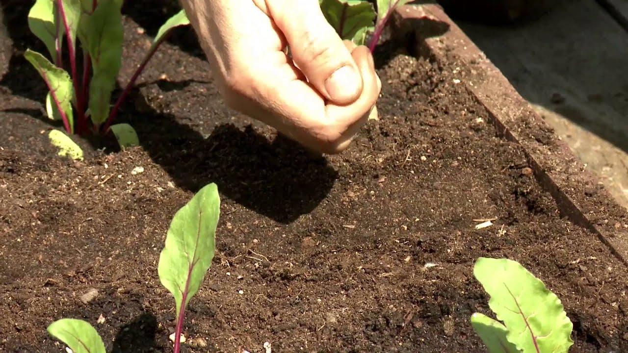 Смотреть онлайн:  Высокие грядки. Добрый урожай. Выпуск 20