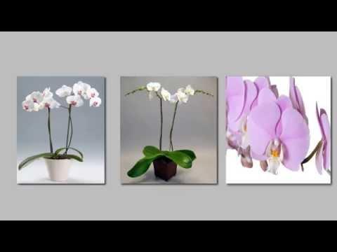 i 5 passi per avere orchidee sane e vigorose tutto l'anno