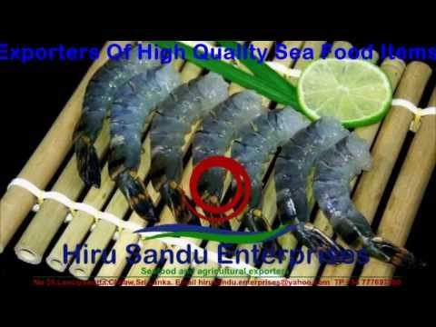 Black Tiger Prawns – Shrimp small quantity supplier – Hiru Sandu Enterprises