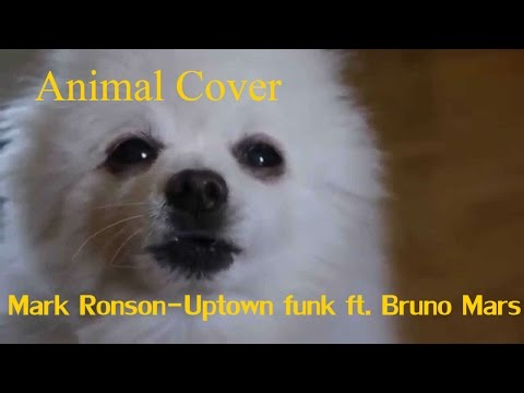 Mark Ronson–Uptown Funk Feat. Bruno Mars (Animal Cover/Gabe The Dog)