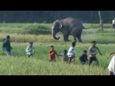 16 elephant attack