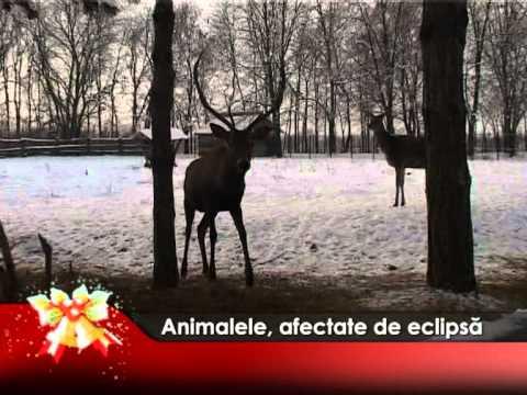 Animalele, afectate de eclipsă