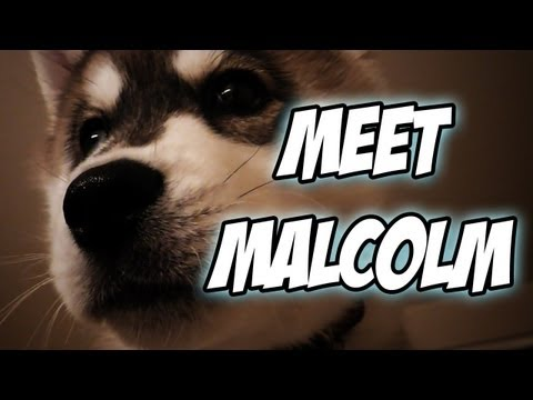 malcolm - Leave a like if yah feel like it, it helps out and makes me happy ;D http://www.youtube.com/subscription_center?add_user=gassymexican I know many of you guys...