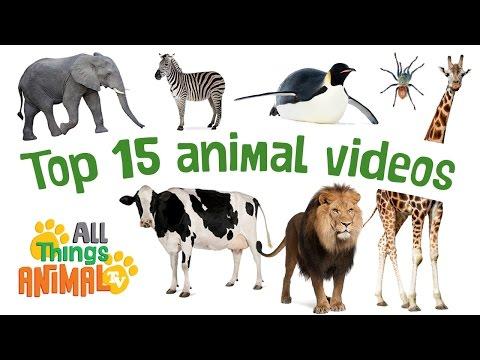 animals essays children