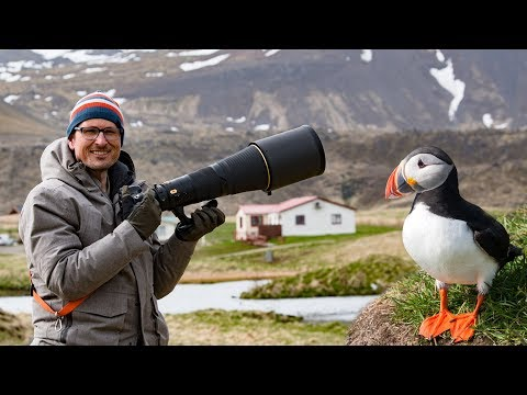 Bird Photography in Iceland