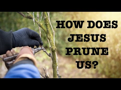 WANT TO BE USEFUL TO GOD--LEARN HOW JESUS PRUNES YOUR LIFE
