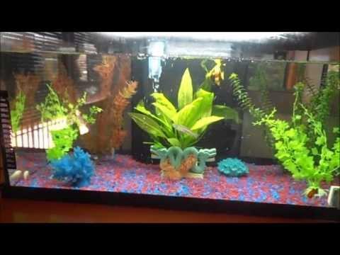 acuarios agua calida videos videos relacionados con