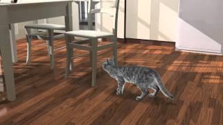 Feline osteoarthritis