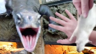 HUGE LIZARD ATTACKS WHILE FEEDING ALL MY ANIMALS AT THE REPTILE ZOO!! | BRIAN BARCZYK by Brian Barczyk