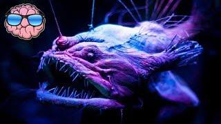 Video Top 10 CREEPY Deep Sea Creatures You Didn't Know Existed! MP3, 3GP, MP4, WEBM, AVI, FLV Juli 2019