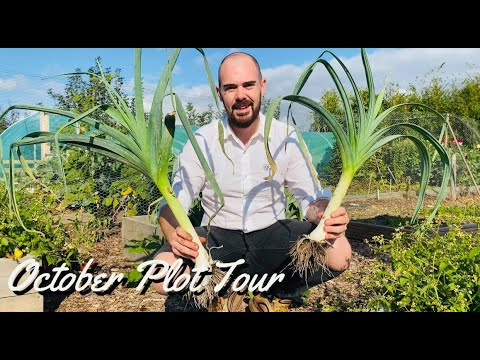 Allotment Plot Tour - FIRST DAY BACK - Harvesting Leeks