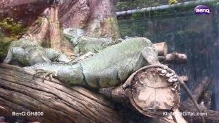 BenQ GH800 Video Test Review : Dusit Zoo, Bangkok, Thailand