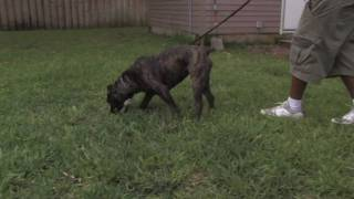 Dog Training&Care : Scent Training Dogs