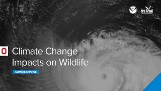 Climate Change Impacts on Wildlife Webinar