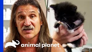 3 Week Old Kittens Rushed To The Clinic For Emergency Care   Dr. Jeff: Rocky Mountain Vet by Animal Planet