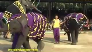Video lucu gajah centil