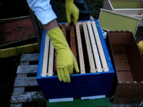 Beginner Beekeeping – Installing a Nuc