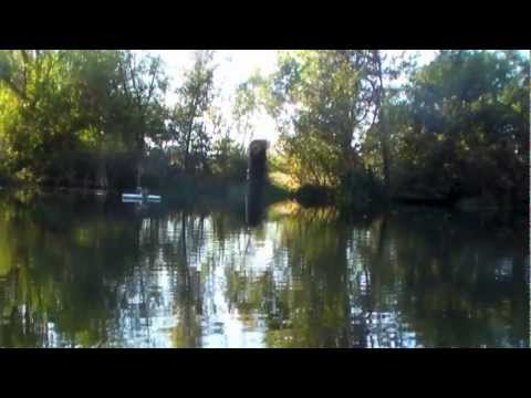 BASS fishing a private pond.