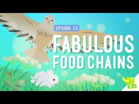 Fabulous Food Chains: Crash Course Kids #7.1