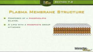 The Plasma Membrane - A View Of The Cell