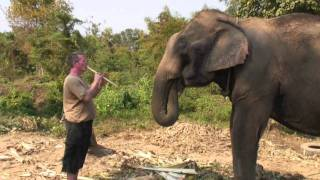 Music For An Elephant - Thailand