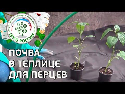 Как вырастить рассаду перца (закаливание). Как подготовить почву в теплице