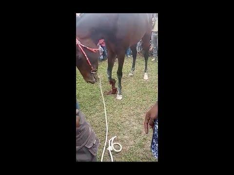 Insiden mengerikan... Pacuan Kuda Kota Payakumbuh 2020