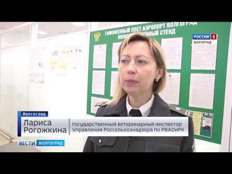 О фитосанитарном и ветеринарном контроле инспекторами Россельхознадзорав аэропорту Волгограда