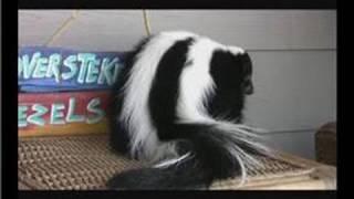 Pet Skunks : Problem Skunks