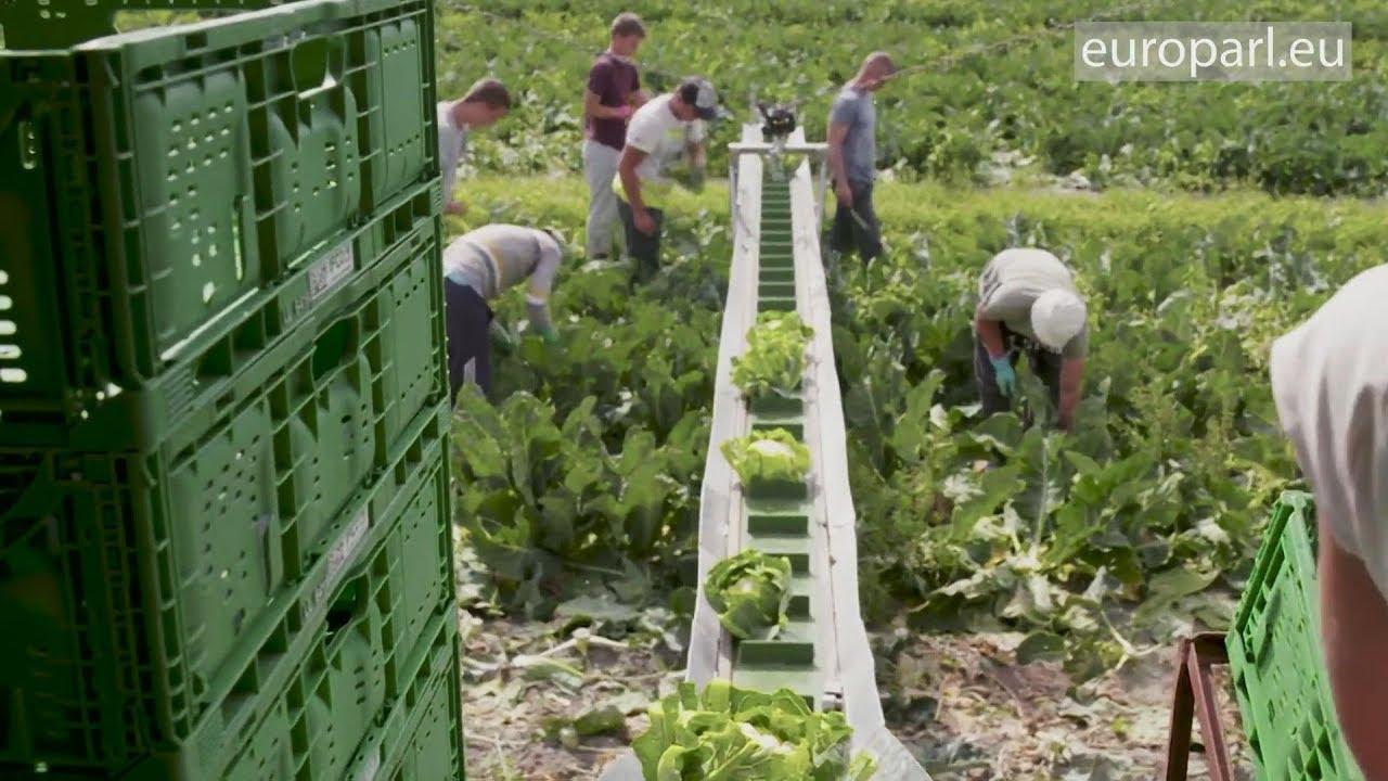 Νέοι κανόνες κατά του αθέμιτου ανταγωνισμού στον αγροτικό τομέα