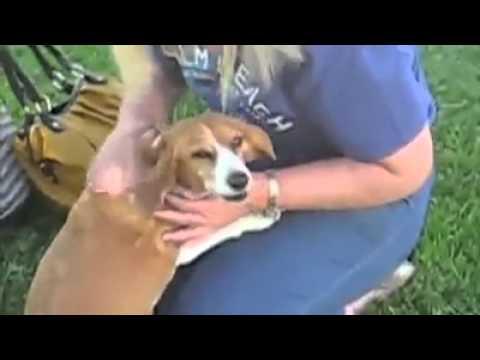 comment localiser son chien