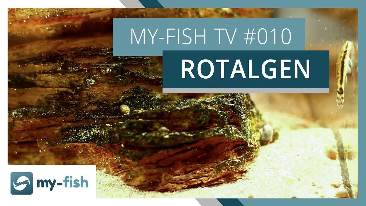 my-fish TV - Deine Nr. 1 Anlaufstelle für alle Themen rund um die Aquaristik 54