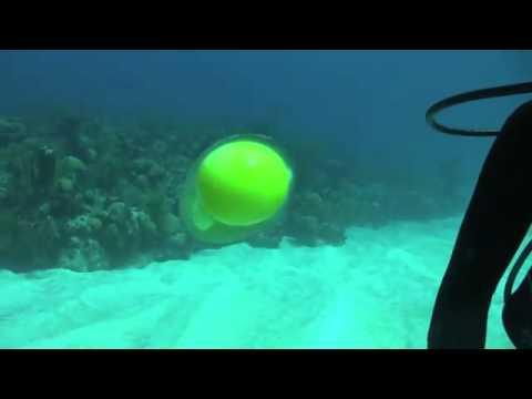 「[水中]水深18メートルで生卵をフワフワさせる動画。最後はバチーンと割っちゃいます。」のイメージ