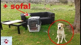 Dogs dumped in fields together with the furniture!   A visit at the KAZ shelter in Athens by The Orphan Pet