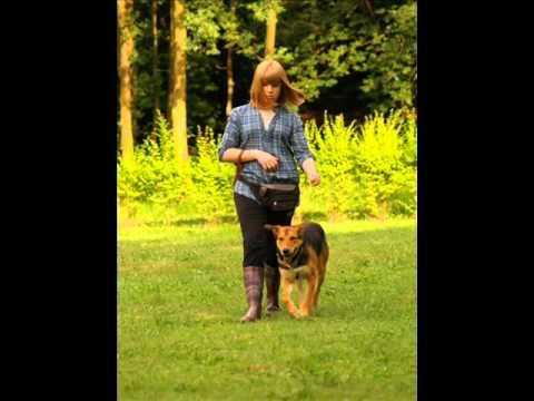 corsi per cani buon cittadino