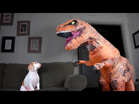 Maymo-koiran uusi kaveri on hirmulisko