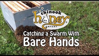 Catching a Honeybee Swarm With Bare Hands (2013)