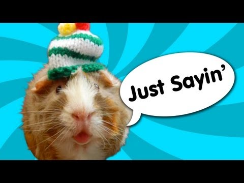 Guinea Pig Speaks Out