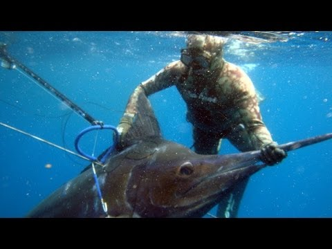 Spearfishing One Fish