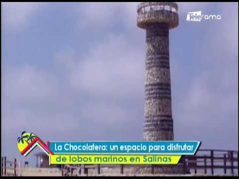 La Chocolatera: Un espacio para disfrutar de lobos marinos en Salinas