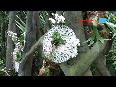 Výstava orchidejí