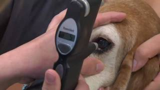 Cataracts in Dogs and Cats - VetVid Episode 011