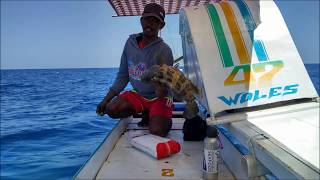 Video Pemancingan Ikan Kerapu hidup dan Mati Nelayan Kepulauan Spermonde MP3, 3GP, MP4, WEBM, AVI, FLV September 2019