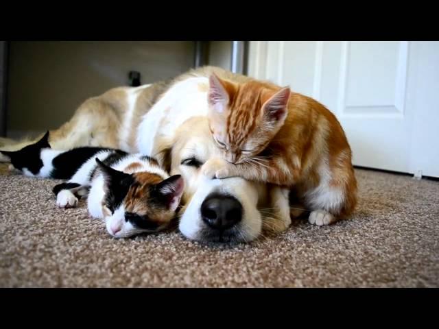 Mẹ cún và mèo con