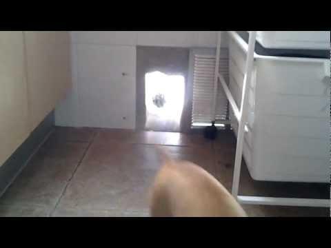 gateras para puertas de cristal videos videos